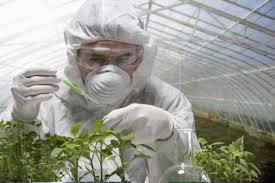 گیاه پزشکی